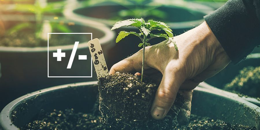 PROS AND CONS OF USING SOIL