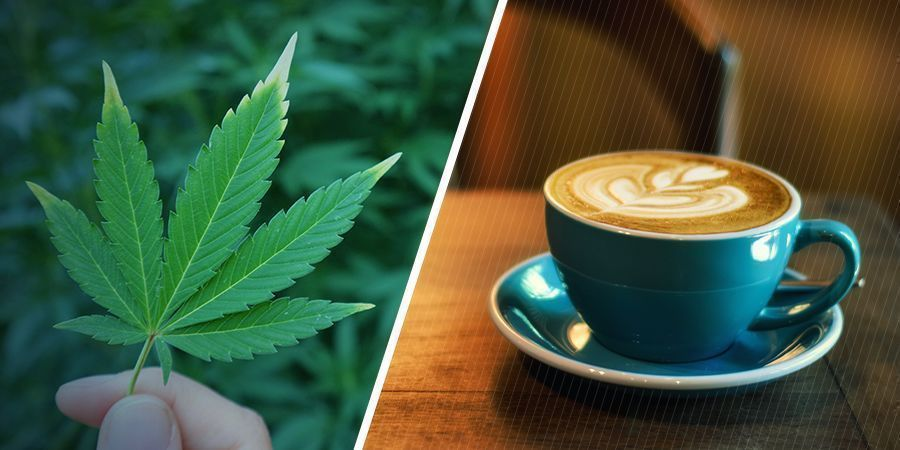 WHAT ARE THE SEPARATE EFFECTS OF MARIJUANA AND CAFFEINE?