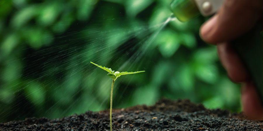 Über- oder Mangelbewässerung