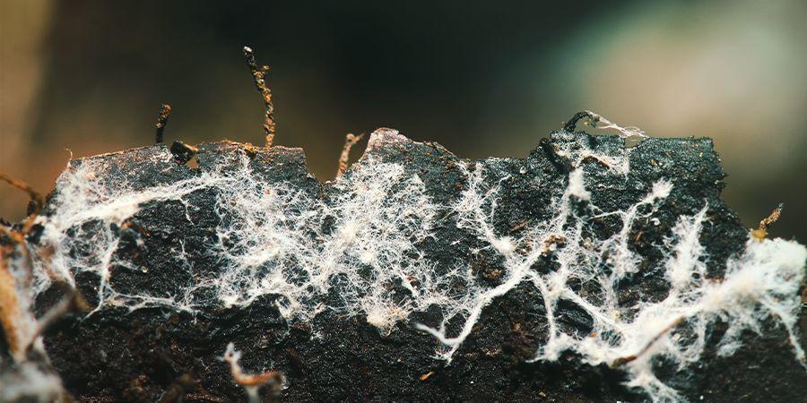Verwende nützliche Mikroorganismen / Mykorrhizae (Pilze)