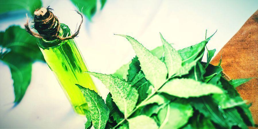 Neem Oil - foliar spray your cannabis