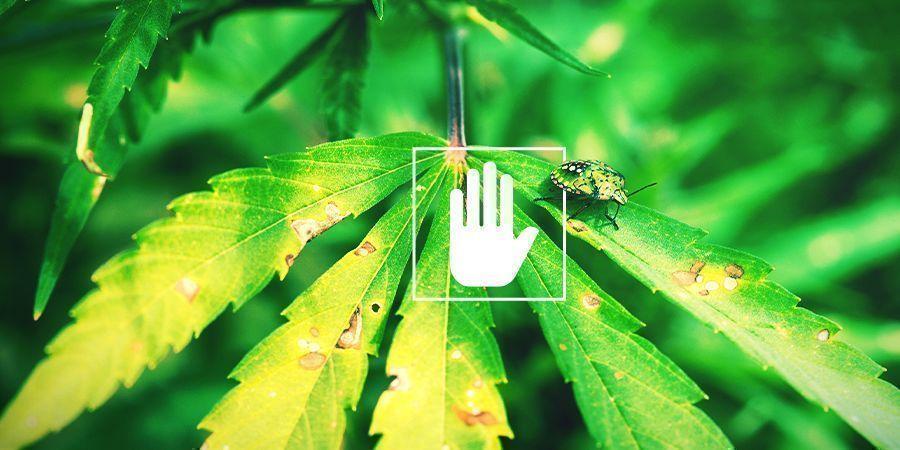 The Benefits Of Foliar Spraying