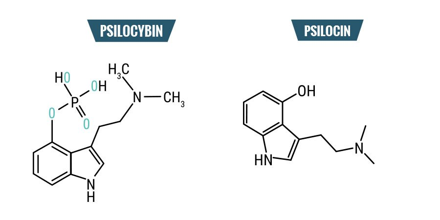 Psilocybin vs. Psilocin