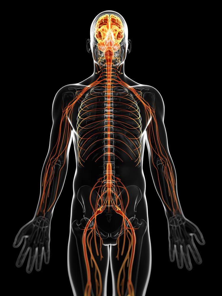 A Peek Into The Endocannabinoid System