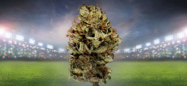 Bruce Banner Cannabis