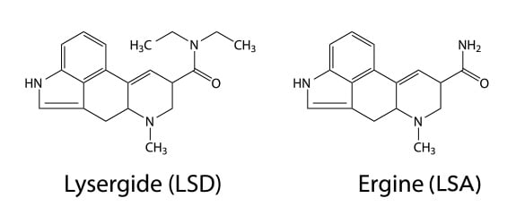 how to make lsd from ergot