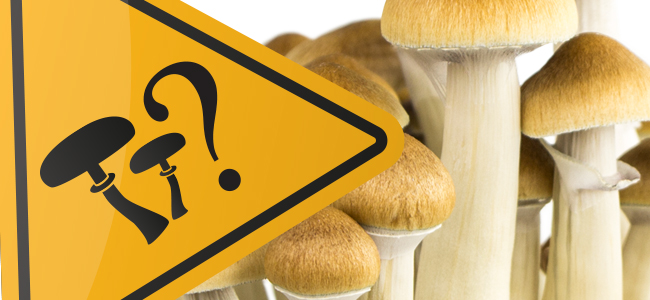 Safe Mushrooms