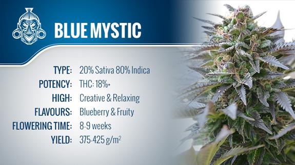 Blue Mystic (Royal Queen Seeds) Fem.