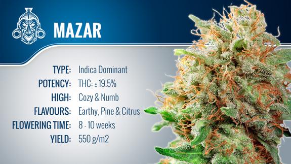 Mazar
