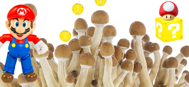 Magic Mushrooms As Inspiration For Super Mario
