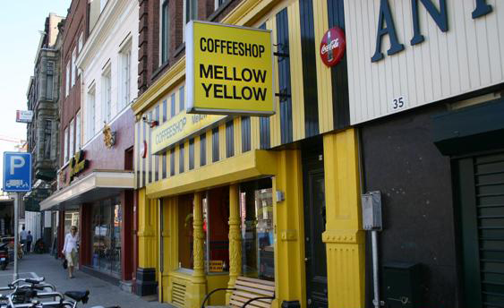 MELLOW YELLOW LOUNGE