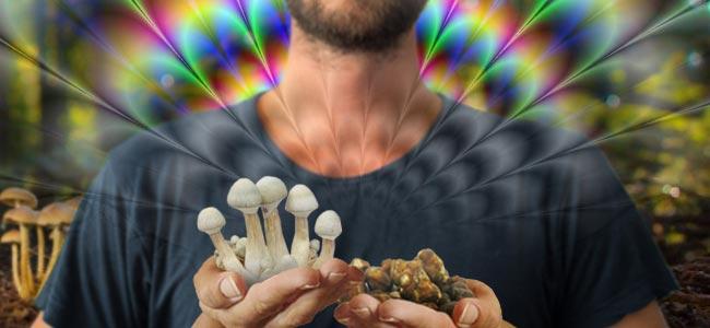 DIFFERENCE BETWEEN MAGIC MUSHROOMS AND MAGIC TRUFFLES