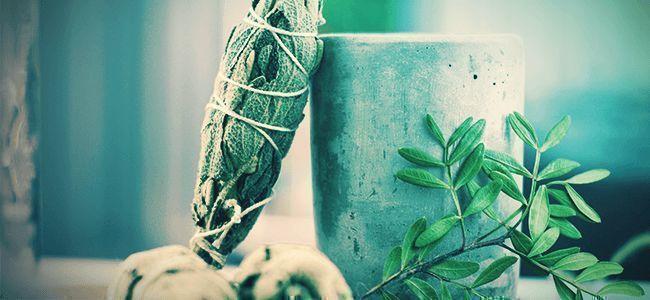 Wie Konsumiert Man Salvia Divinorum?