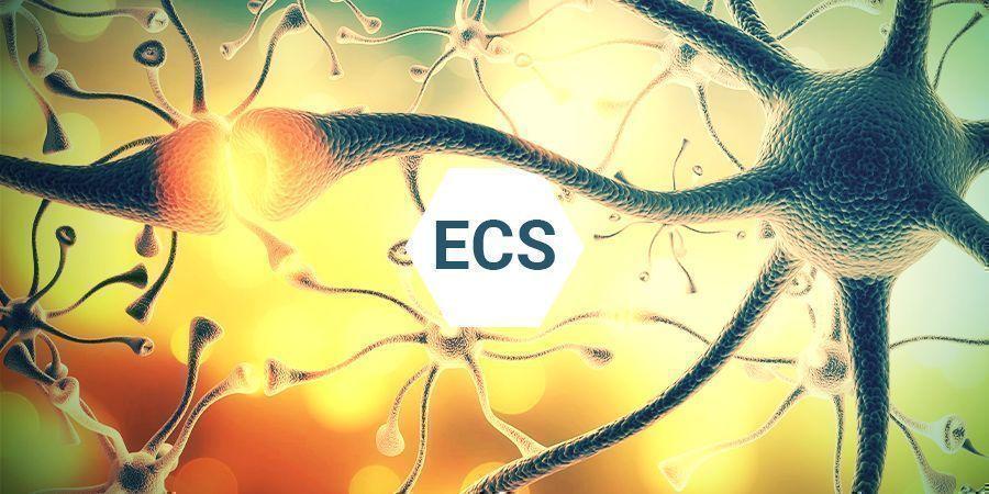 Was Ist Das Endocannabinoid-System?