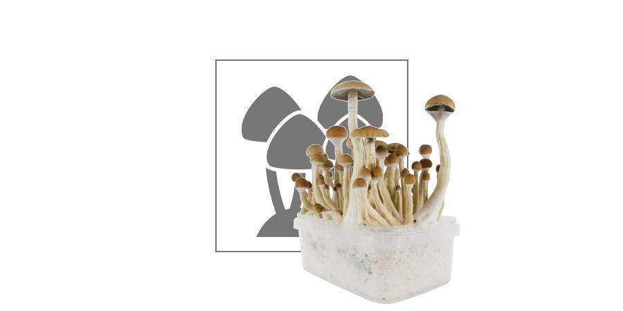 VP Fresh Mushrooms Grow Kit