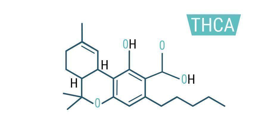 Cbd Thc Cbg Ein Genauer Blick Auf Die Cannabinoide