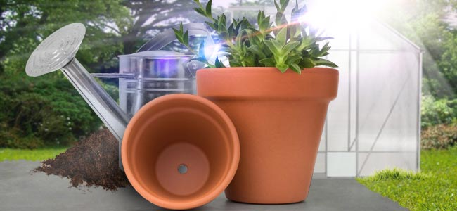 Pots, soil and growing conditions