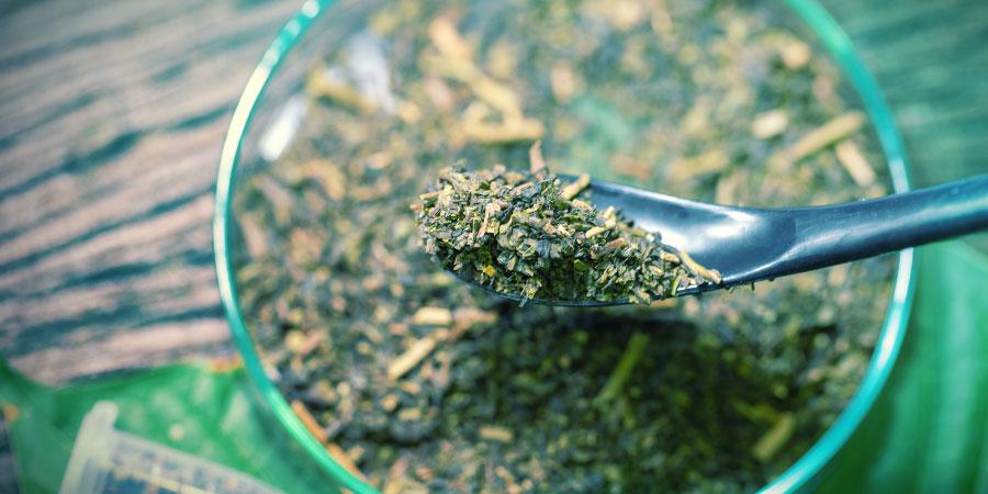 Weitere Maßnahmen Gegen Kratom Und Verwandte Substanzen