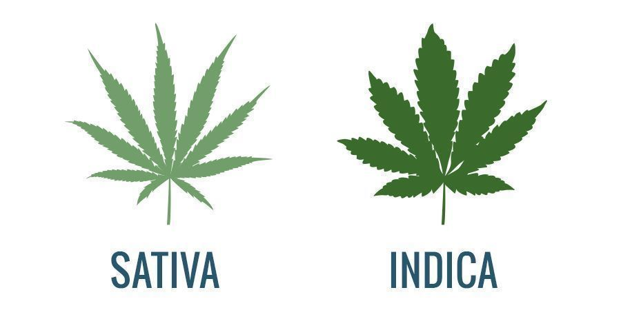 Sativa Vs. Indica: Traits