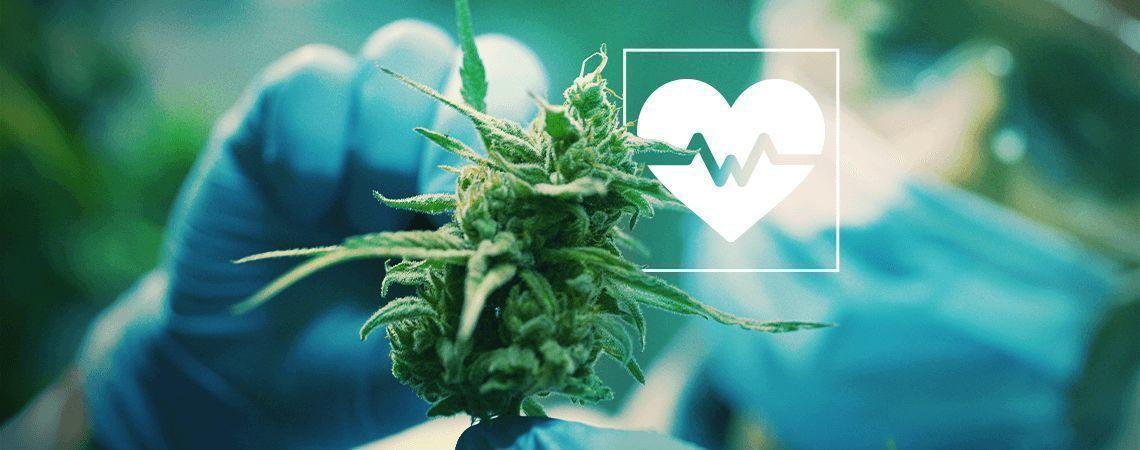 Cannabisforschung: Eine Auswahl der wichtigsten medizinischen Studien