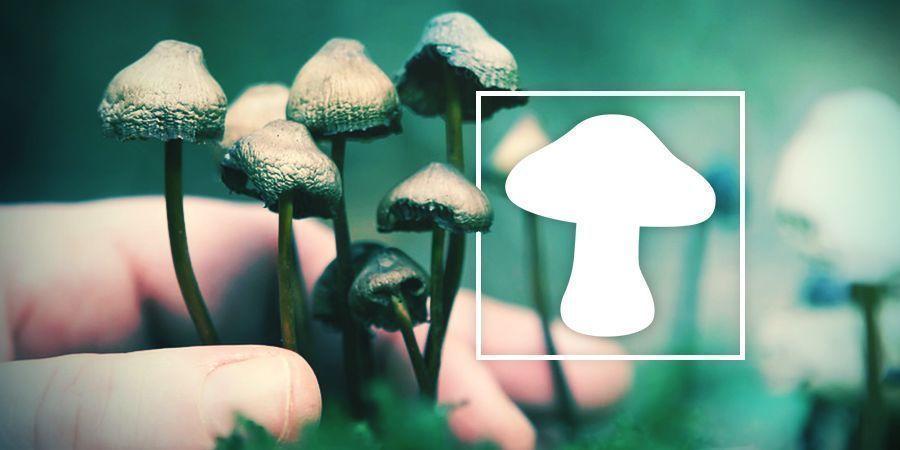 An In Depth Look At Magic Mushroom Usage