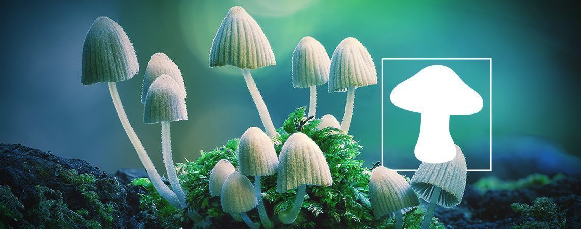 An In Depth Look At Magic Mushroom Usage