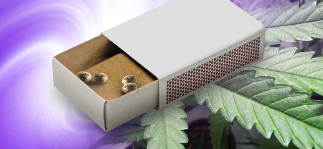 Scarifying Your Cannabis Seeds