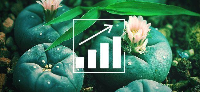 HOW TO GROW PEYOTE (LOPHOPHORA WILLIAMSII)