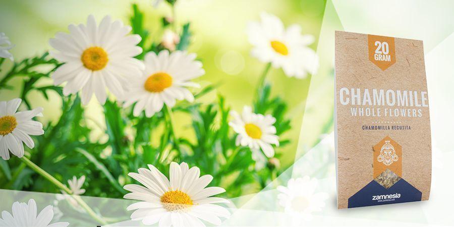 Chamomile  - Vape Herbs For A Good Mood