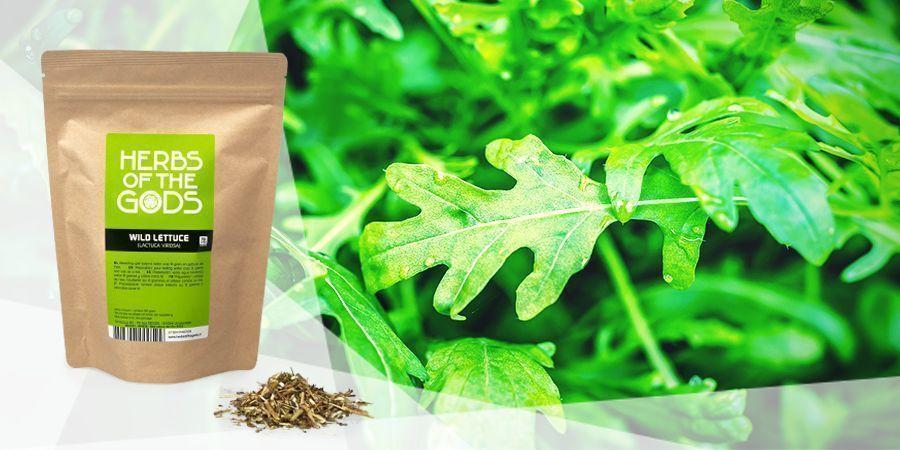 Wild Lettuce - Vape Herbs For A Good Mood