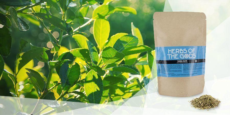 Yerba Mate - Vape Herbs For A Good Mood