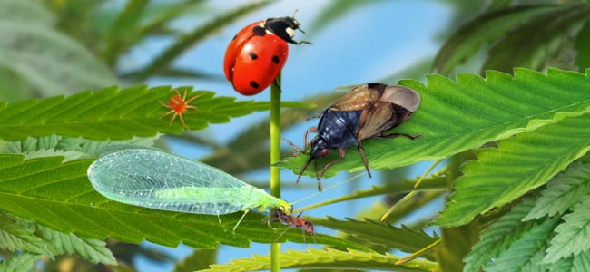Friendly Bugs & Insects