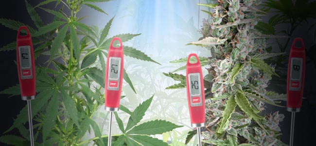 Optimal Temperature Ranges For Growing Cannabis