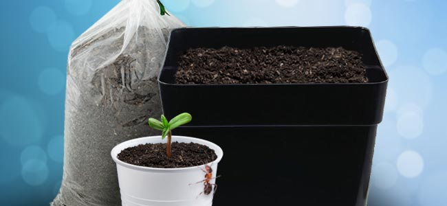 THE CORRECT CONTAINER FOR A CANNABIS SEEDLING