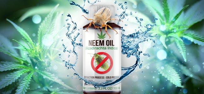 Neem Oil And Cannabis Plants