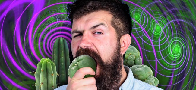 How To Dose Mescaline Cacti Properly
