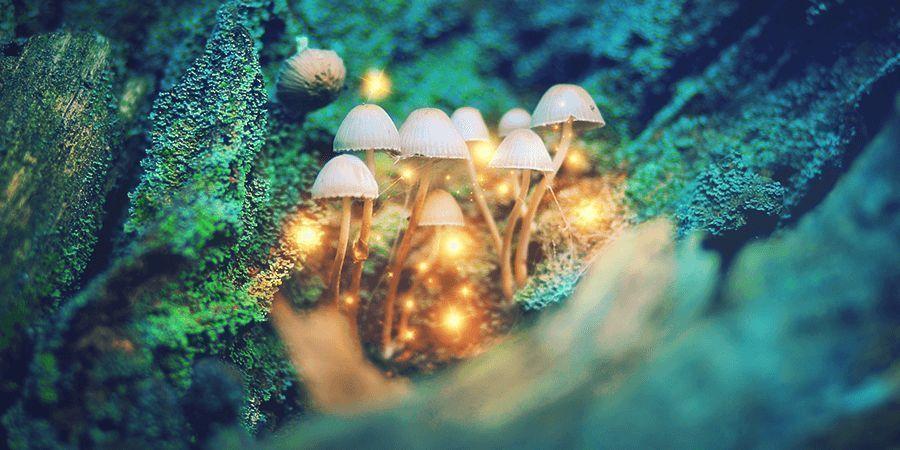 HOW TO MICRODOSE MAGIC MUSHROOMS?