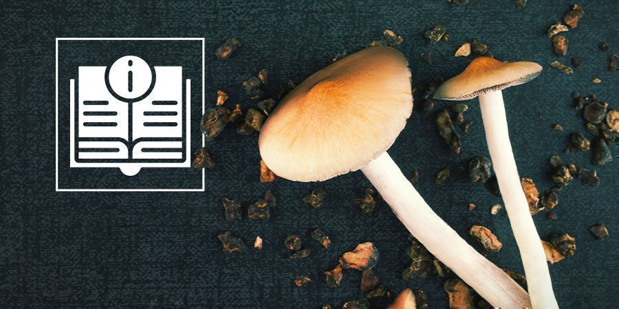Magic Mushroom And Truffle Information