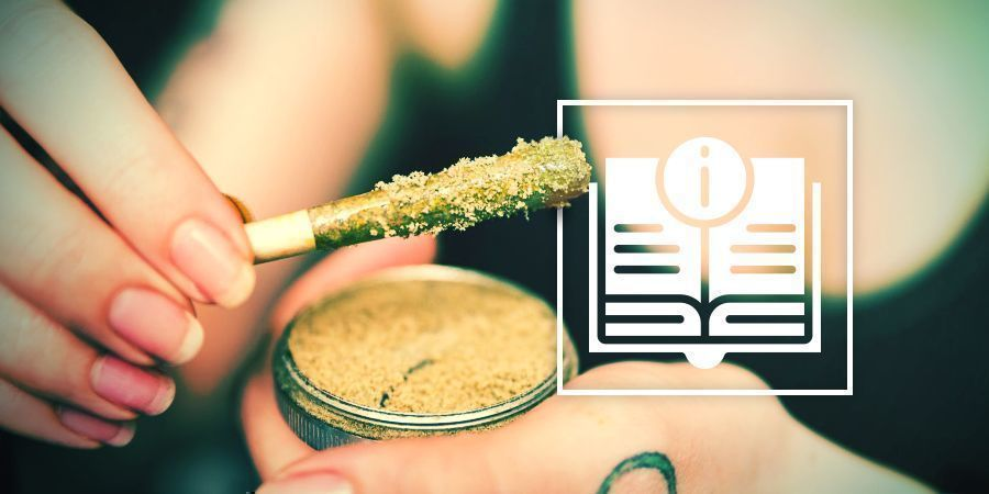 The Ultimate Guide To Cannabis Concentrates