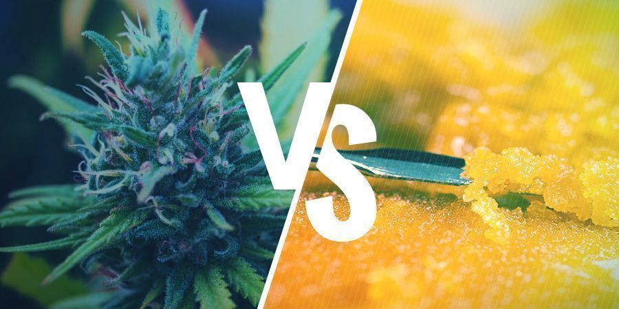 DIFFERENCE BETWEEN THE CANNABIS FLOWER AND CONCENTRATES