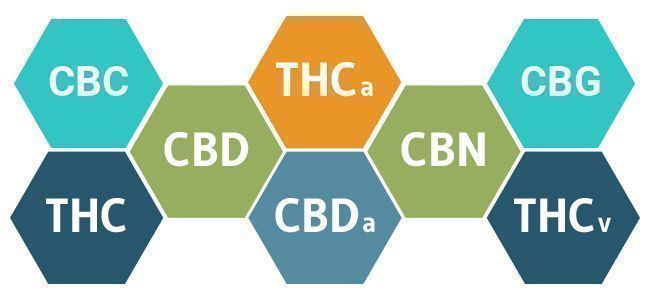 Full Spectrum CBD Vs. CBD Isolate: Advantages And Disadvantages