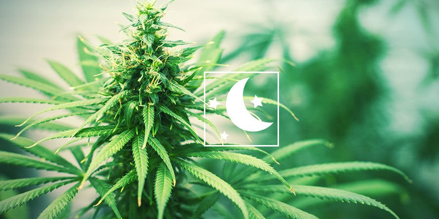 EVERYTHING ABOUT PHOTOPERIOD CANNABIS