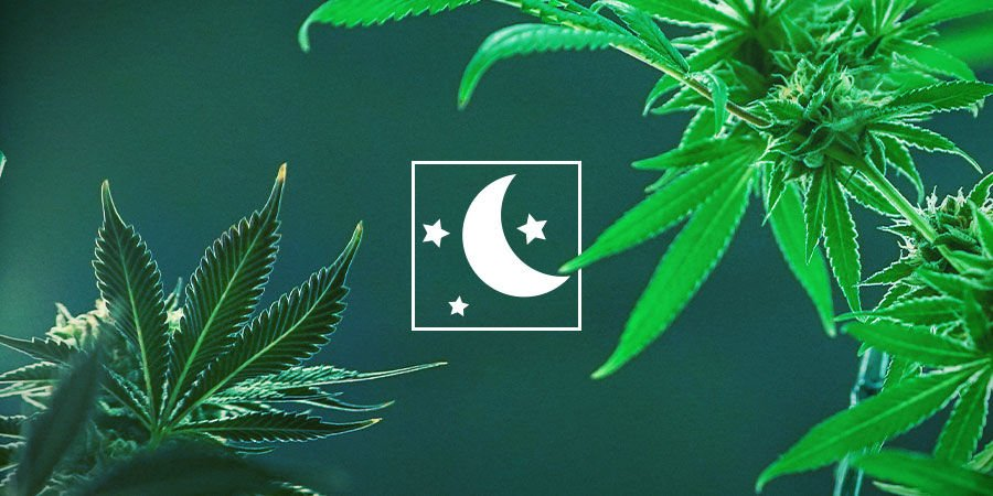 Pick The Type Of Cannabis That Best Suits Your Needs