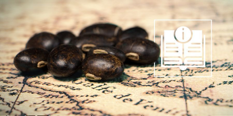 Velvet Beans: Everything You Need To Know