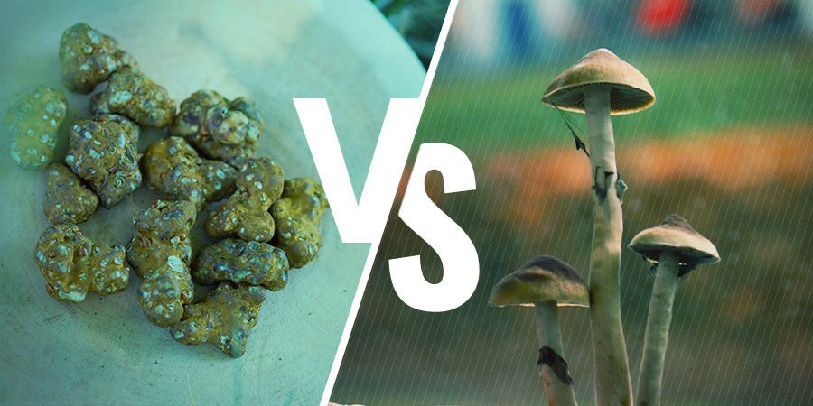 DIFFERENCES BETWEEN MAGIC TRUFFLES AND MAGIC MUSHROOMS