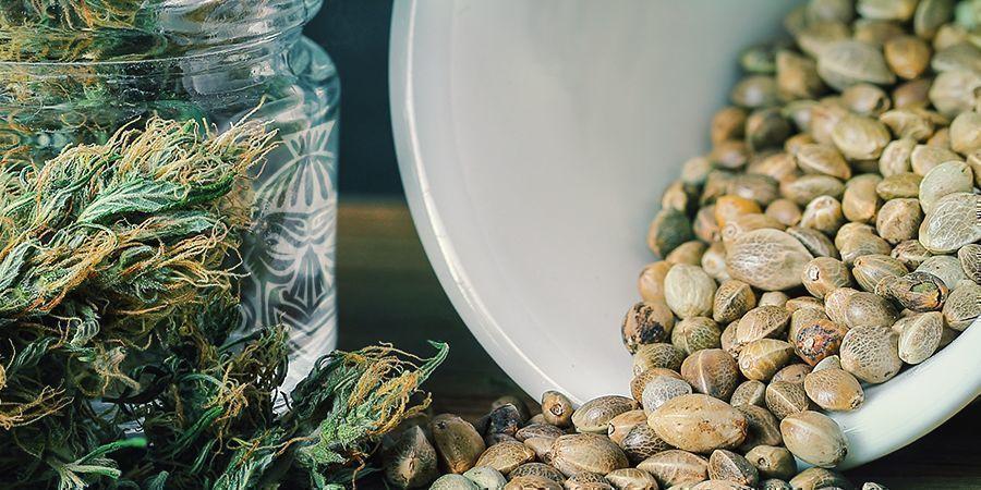 Zamnesia Free Cannabis Seeds Promotion