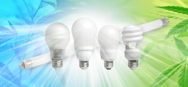 Compact Fluorescent Lights (CFL)