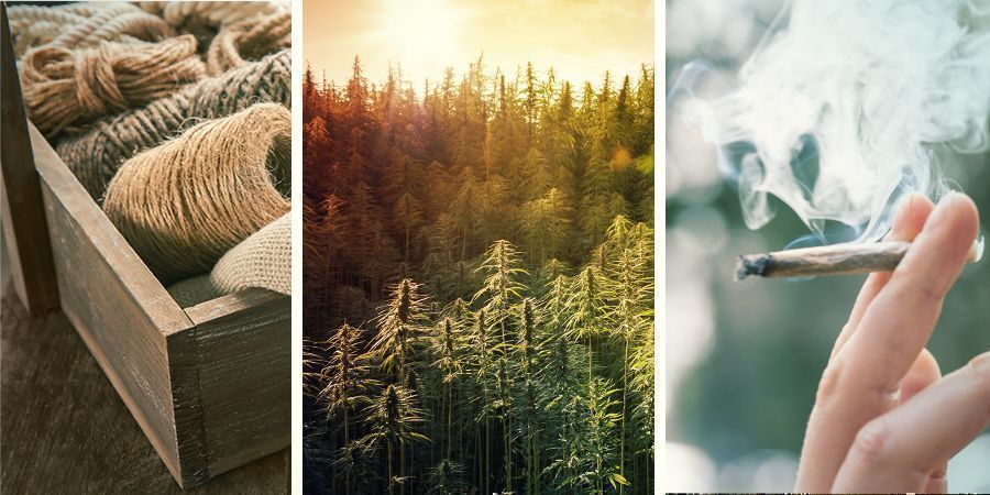 The Difference Between Hemp, Marijuana, and Cannabis