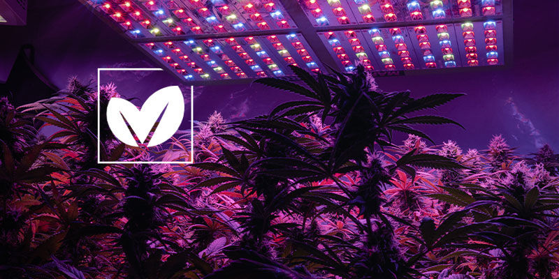 How To Make Your Cannabis Grow space As Green as Possible