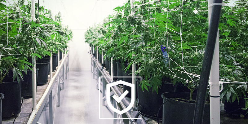 Keep Your Cannabis Grow Space As Safe as Possible